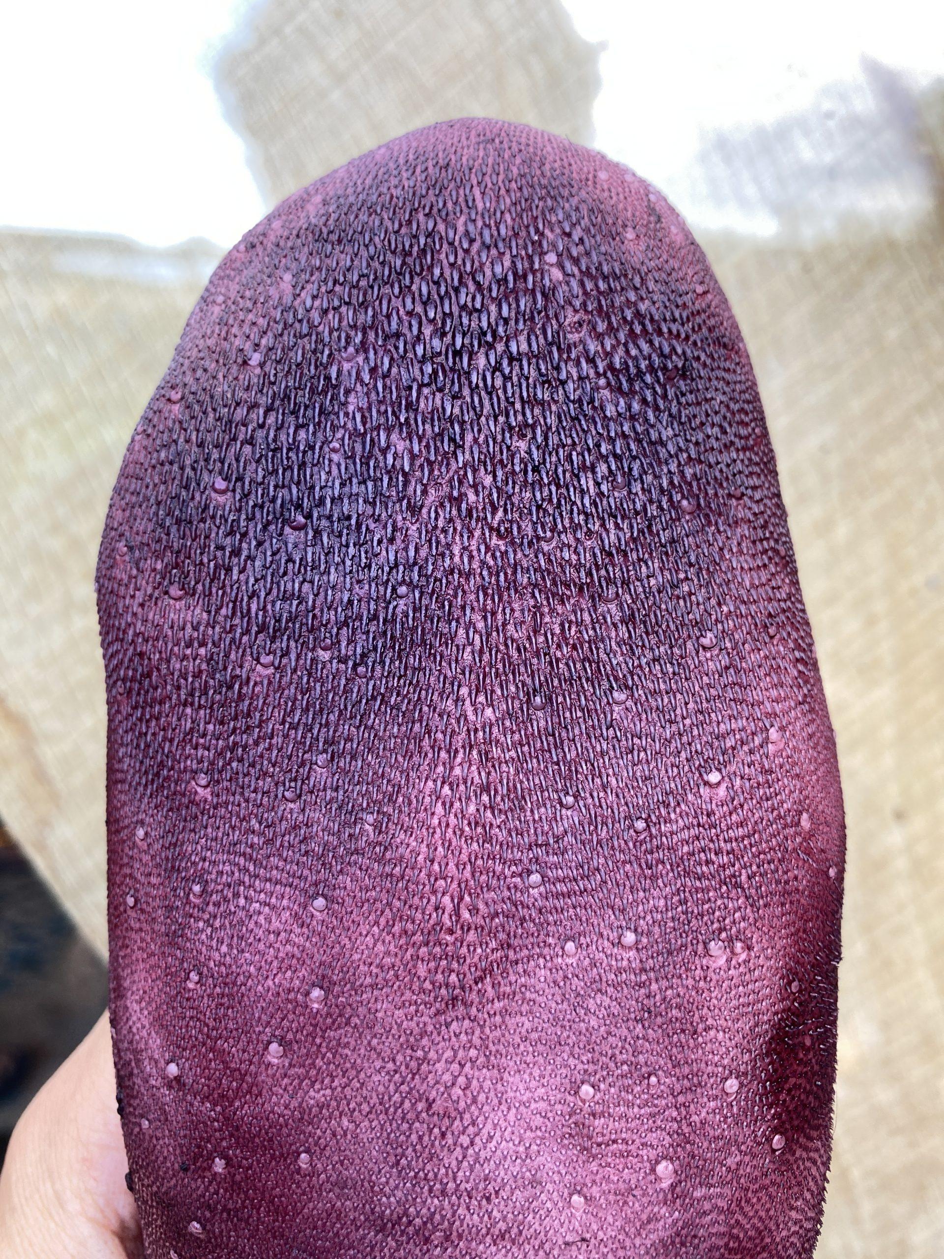 Litmus tongue